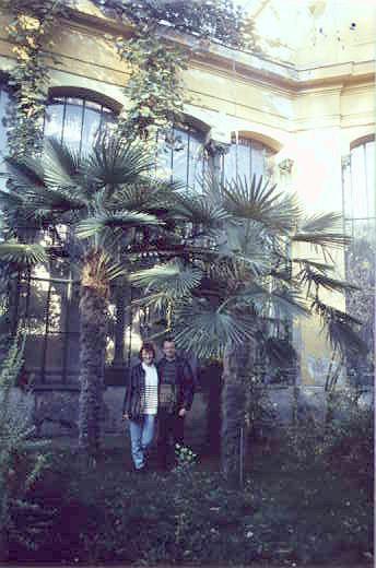 Group Trachycarpus fortunei at ELTE Botanical Garden